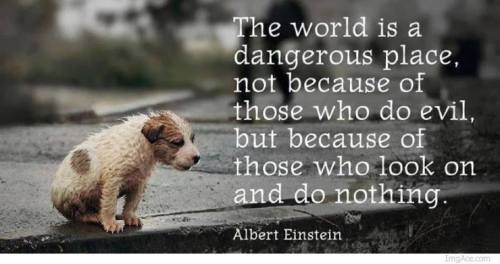https://www.facebook.com/StopAnimalCrueltyWorldwide