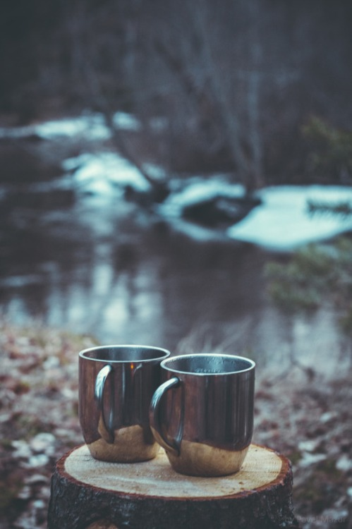 coffee cups woods trees winter