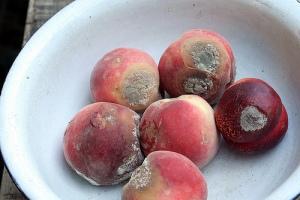 rotten_fruit